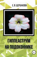 Елена Щербакова -Гиппеаструм на подоконнике