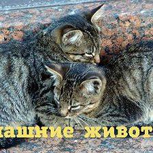 Алексей Норкин - Как нам помогают домашние животные