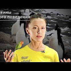 Евгения Тимонова - Пингвины легкого поведения