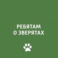 Творческий коллектив программы «Пора домой» - Психология собаки