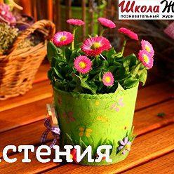 Гертруда Рыбакова - Мокрица – вредный сорняк или полезное растение?