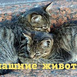 Ирина Лукьянчик - Чем опасна весна для домашних питомцев?