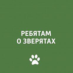 Творческий коллектив программы «Пора домой» - Дикие кошки