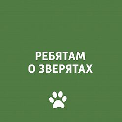 Творческий коллектив программы «Пора домой» - Собаки
