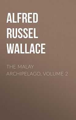 Alfred Wallace - The Malay Archipelago, Volume 2
