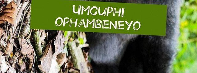Umcuphi ophambeneyo. Umcuphi ohlekisayo