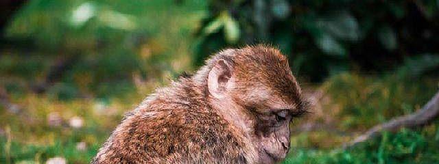 Франс де Вааль: Истоки морали. В поисках человеческого у приматов. Саммари