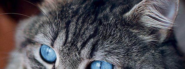 Кот знает всё