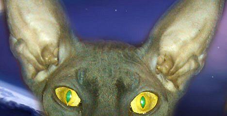 Дневник Космического Кота
