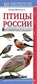 Ксения Митителло -Птицы России. Наглядный карманный определитель