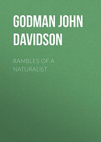 John Godman -Rambles of a Naturalist