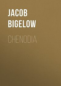Jacob Bigelow -Chenodia