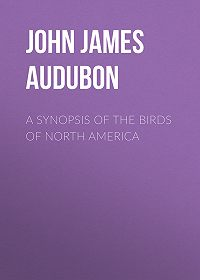 John Audubon -A Synopsis of the Birds of North America