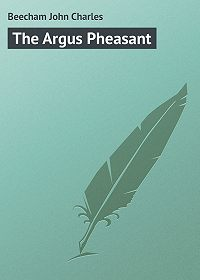 John Beecham -The Argus Pheasant