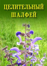 Иван Дубровин - Целительный шалфей